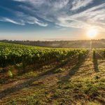 ancient-thrace-tour-of-wine-and-culture-2