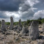 stone_forest